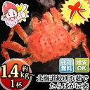 北海道紋別浜茹でたらばがに姿【約1.4kg〜】[ボイル|ボイル姿|ボイル済み|かに|カニ|蟹|たらば蟹|タラバ蟹|タラバガニ|タラバ] - 海鮮かに処