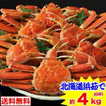 北海道紋別浜茹で ずわい蟹姿 6杯(約4kg)[丸ごと|ボイル済み|茹で|ボイルずわい|ボイルズワイ|ボイルずわい蟹|ずわい蟹|ズワイ蟹|ズワイガニ|ズワイ|かに]