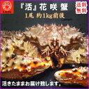 送料無料 活 花咲ガニ 1尾 1kg北海道を代表するはなさき蟹をご堪能ください! かに/カニ/蟹/ハナサキ/花咲/お取り寄せ/限定品/532P16Jul16