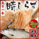 【送料無料】塩時鮭 2kg前後1尾お歳暮 御歳暮 ギフト 時しらず 時知らず