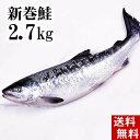 (送料無料)新巻鮭の姿 2.7kg 味を引き立てる塩気と、身が引き締まりしっとりと...