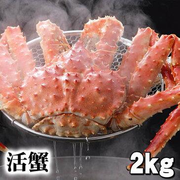 活タラバガニ 活本タラバガニ オス 2kg前後 茹でたてなら到着後、すぐ食べられる未冷凍の本タラバガニです。活カニならではのお刺身用でも食べられます。焼きガニ、蒸し蟹も美味しい。活カニタラバ蟹