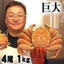 (送料無料)超特大な毛蟹 1kg 4尾入り ボイル冷凍 北海道産の毛ガニです。毛がにの醍醐味でもあるカニ味噌とかに身と絡めてお召し上がりください。かに通販 蟹みそ北海道グルメ食品 魚介類・シーフード カニ 毛ガニ【#元気いただきますプロジェクト】