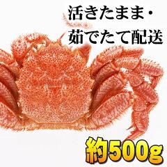 北海道産 活毛蟹 500g前後 中型 毛ガニの美味しさを味わうなら、未冷凍の活蟹。