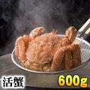 北海道産 活毛ガニ 600g前後 大型 毛ガニの美味しさを味...