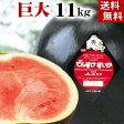 (送料無料)巨大でんすけすいか 秀品 6L 11kg以上 黒い皮の中には赤の果肉、伝助・田助西瓜。ギフトに喜ばれる北海道のデンスケスイカ、旬のフルーツ グルメ食品 フルーツ・果物 スイカ 黒皮スイカ でんすけスイカ(ギフト お中元)