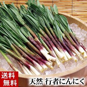 (送料無料)天然 行者にんにく 美味しい旬の北海道産春野菜、行者ニンニクを産地直送。ギョウジ...