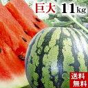 )(送料無料)富良野・浦臼産マドンナスイカ 秀品 6Lサイズ...