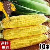(送料無料)黄色種のとうもろこし、ゴールドラッシュまたはサニーショコラ 旭山動物園ライオンコーン 10本入り(北海道産スイートコーン)朝もぎ・朝採りの野菜、産地直送の甘いトウモロコシ。生とうきび/生なんば 北海道グルメ食品 野菜・きのこ とうもろこし
