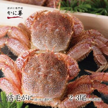毛ガニ セット 活毛ガニ 訳あり 2〜3尾 (1.5kg前後) 北海道産 冷蔵 ボイル対応 かに 毛蟹 活かに 活蟹 刺身も 年内発送