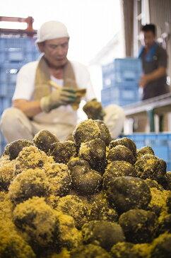 丹波篠山産 山の芋 優品2kg箱入り