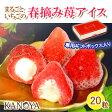 【送料無料】春摘み苺アイスクリーム(20粒入)R (短冊のし) ギフト