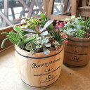 多肉植物の寄せ植え(鉢色選べる♪ウッドバレル鉢植え)Lサイズ