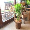 ミリオンバンブー ドラセナ サンデリアーナ 6号鉢サイズ 鉢植え 送料無料 薫る花 観葉植物 おしゃれ インテリアグリーン 中型 小型