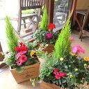 季節のおまかせ寄せ植え(鉢色選べる♪スクエアウッドボックス鉢植え)