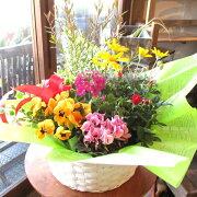 季節のおまかせ寄せ鉢(Lサイズ)