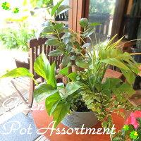 観葉植物のおまかせ寄せ鉢(カンパーニュブリキ丸型バケツ)Mサイズ