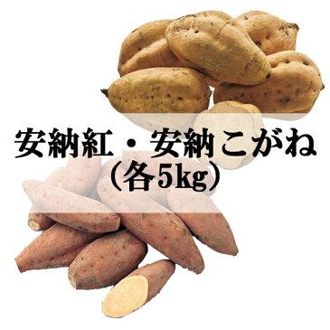 【さつまいも】【鹿児島】【安納芋】【種子島】JA種子屋久 安納紅・安納こがね(各5kg)【楽ギフ_のし】【楽ギフ_のし宛書】