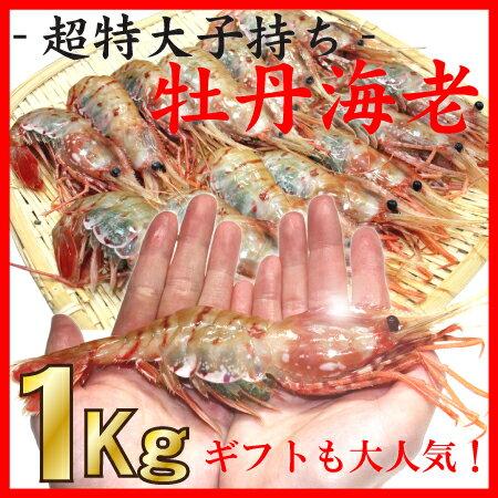 子持ちボタンエビ超特大1キロ 《ビックサイズ牡丹海老2Lサイズ15尾前後》お刺身 海鮮 B...
