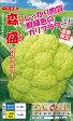 鮮やかカリフラワー「森盛」もりもり(種子小袋:約30粒)