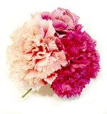 存在感アリアリのお花です!