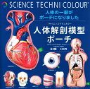 いきもん サイエンステクニカラー 人体解剖模型ポーチ ガチャガチャ 全8種セット(フルコンプ)