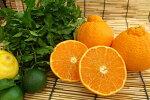 南アフリカ産バレンシアオレンジ(1個)