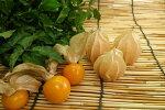 愛知県産ストロベリートマト食用ホオズキ1pk