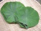徳島県産はすの葉(10枚)