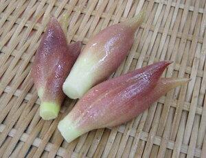 高知県産 花みょうが(1pk)