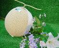 網野の琴引メロン(1個入)