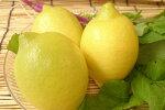 国産レモン(3個)