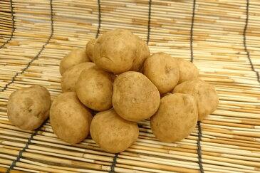 北海道産 新馬鈴薯きたあかり Sサイズ 500g入