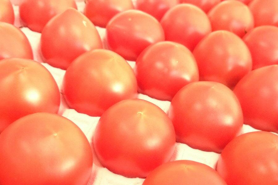 高知県日高村のシュガートマト(約1,5kg、32-40個入)