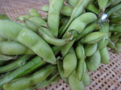 京都産黒枝豆たんくろう京都が生んだ夏の逸品です!(5束、枝付、約2.5kg)