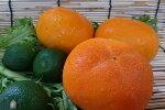 奈良県産「刀根柿」(1個)