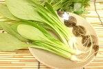 愛知県産うぐいす菜(1束)