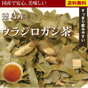 ウラジロガシ茶 徳島県産100%の美味しいうらじろがし茶レビューで10g増量サービスウラジロガシ...