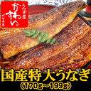 肉厚タップリで食べ応え満点!関東のうなぎ専門店の約2倍の大きさの国産うなぎの蒲焼きです。【...