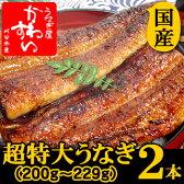 超特大うなぎ蒲焼き 200g-229g×2本セット【ウナギ 鰻 国産 贈り物】