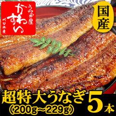 【ギフト】超特大うなぎ蒲焼き 200g-229g×5本セット【 ウナギ 鰻 国産 贈り物】
