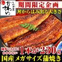 \いまだけクーポン利用で最大1000円OFF/メガサイズ国産うなぎ蒲焼...
