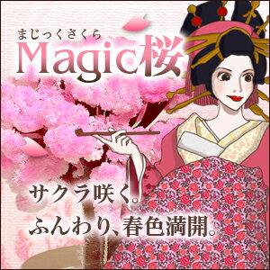 自分で咲かせる不思議な卓上サクラ-MAGIC桜(マジックサクラ)-