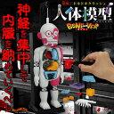 より怖い新型!New放課後の怪談シリーズ恐怖! ドキドキクラッシュ人体模型 BONE-VER ( ボンバー )