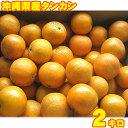 【送料無料】 沖縄産タンカン(たんかん)約2kg