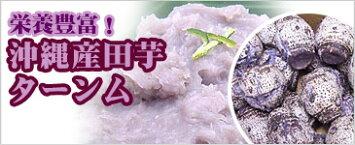 沖縄県産田芋(ターンム、田楽、ドゥルワカシー)