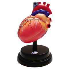 【2/16 9:59までエントリーでポイント10倍】 分解して構造をみることができる心臓の立体模型。...