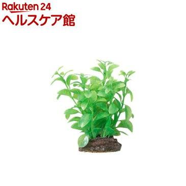 アクアティックプランツ M-7(1コ入)【アクアティックプランツ】
