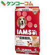 アイムス 成犬用 健康維持用 ラム&ライス 小粒 5kg[ドッグドライ 成犬 アダルト ラム]【あす楽対応】【送料無料】