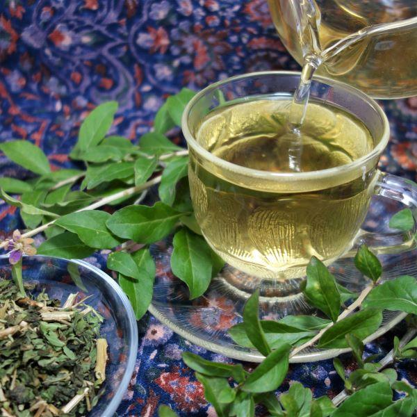 クコの葉茶 ( 枸杞の葉茶 )250g×2個【...の紹介画像2